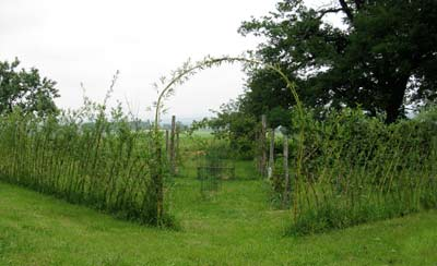 The willow fence