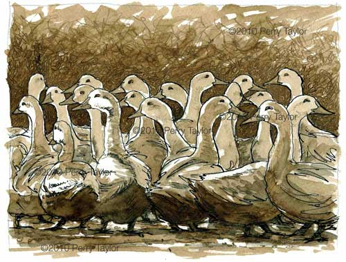 an indian ink drawing of ducks