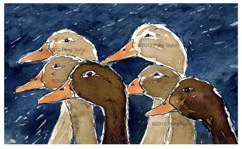 ink drawing of ducks on a blue background